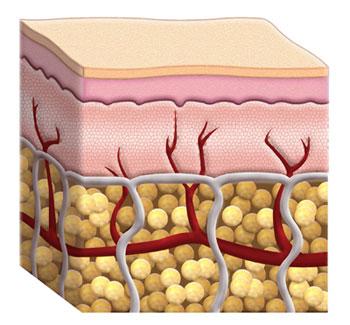 Afectación de la microcirculación